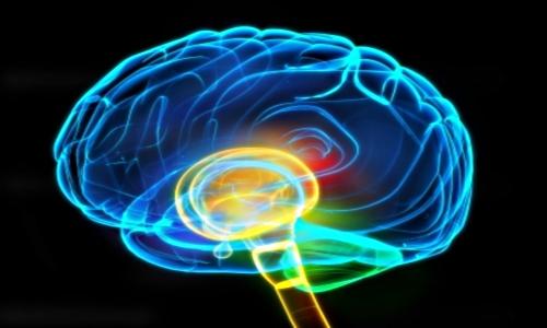 alpha waves in brain